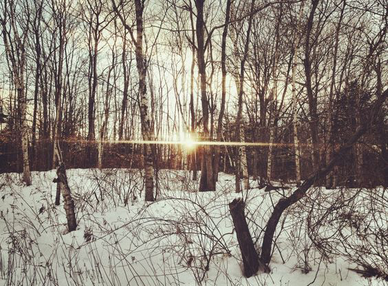 A snowy forest view broken by the setting sun flaring through the tree trunks